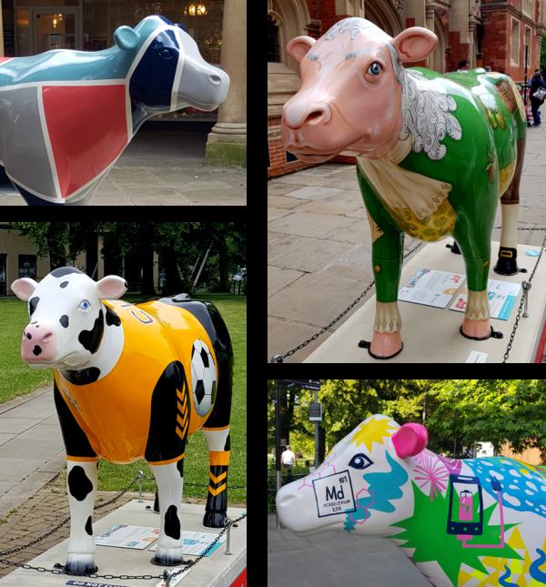 "Fun walking tour ""Cows about Cambridge"""