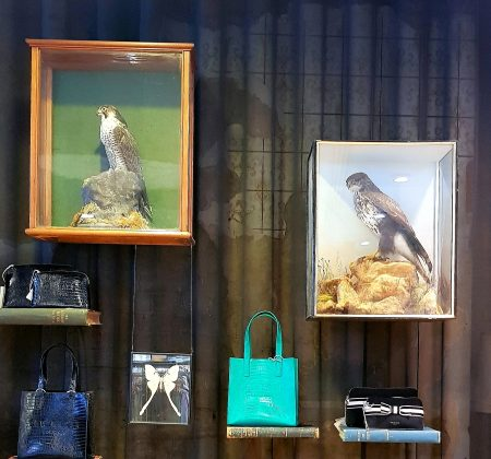 Cambridge scientists and dead birds: inside Ted baker's shop in Cambridge